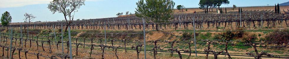 Animo Valencia - Visite d'une cave à vin